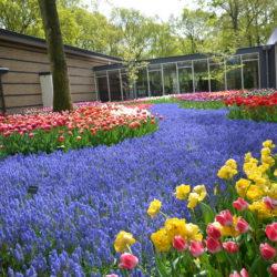 Piastuny w Holandii